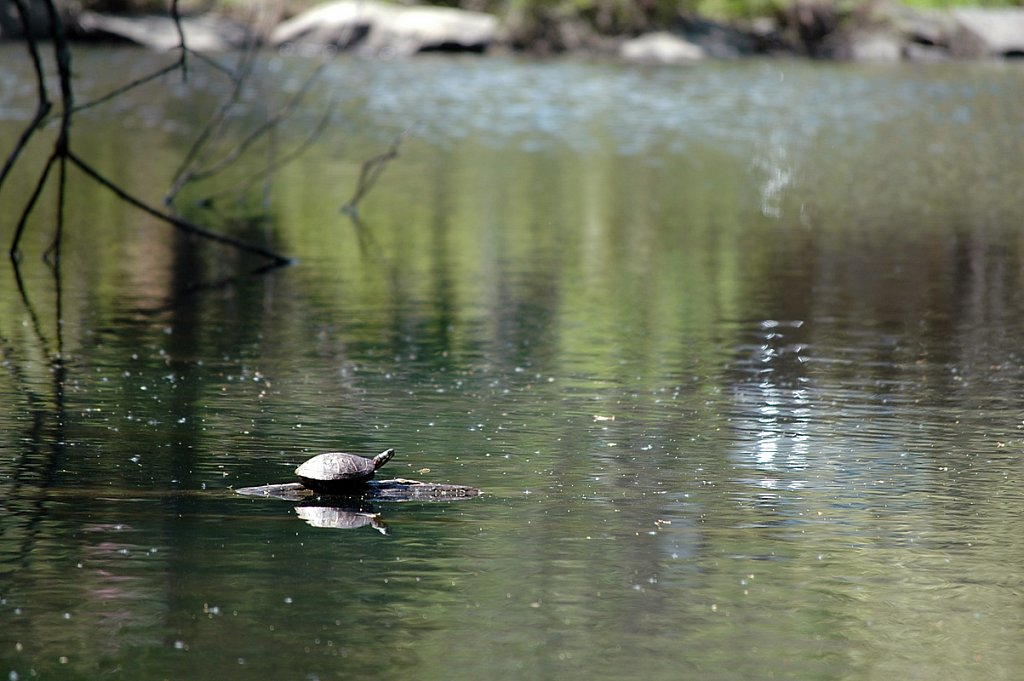turtlePond02-small.jpg
