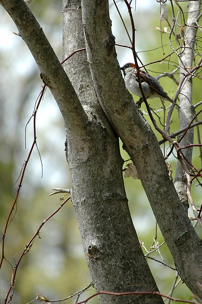 bird-cropped2.jpg