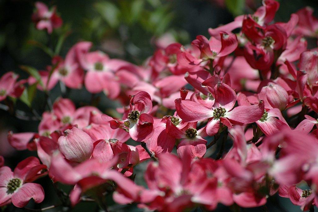 flowerTree.jpg