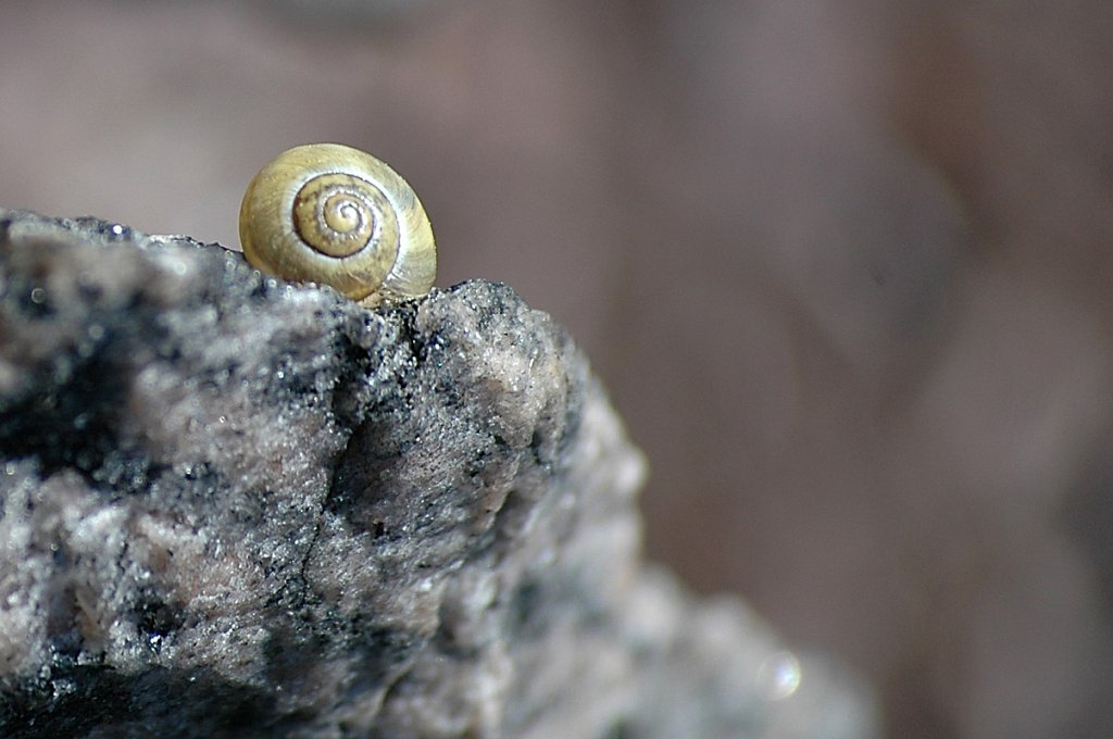 snail-cropped-small.jpg